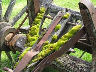 mossy wagon