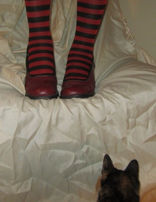 cat and socks