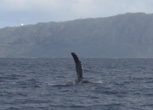 humpback again