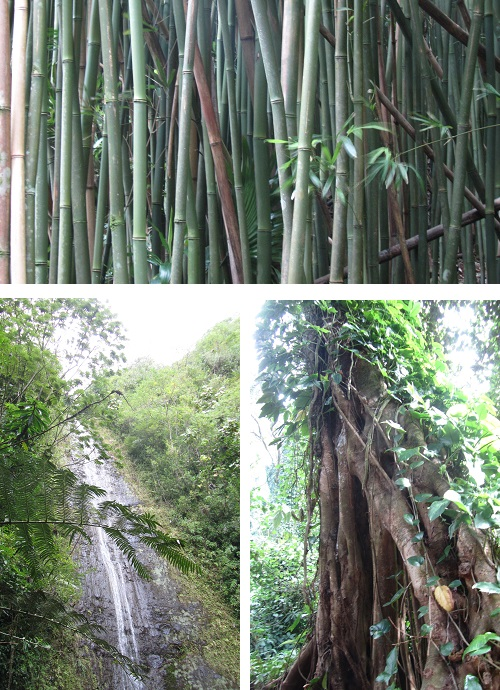 bamboo, trees, and the falls