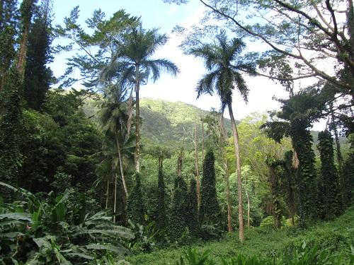 Manoa Falls Park