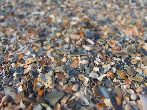 shells on th ebeach